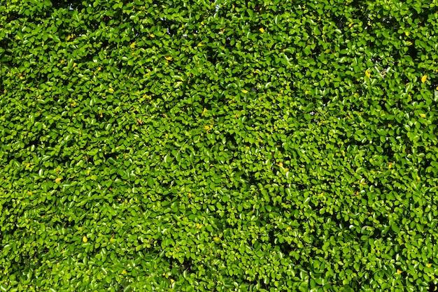Achtergrond van het aard de groene blad en geweven.