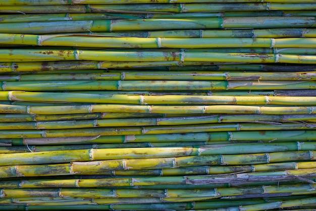 Achtergrond van het de textuurpatroon van de rivier de groene rietoogst