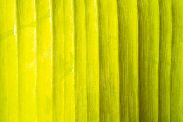 Achtergrond van het het blad de vooraanzicht van de banaan