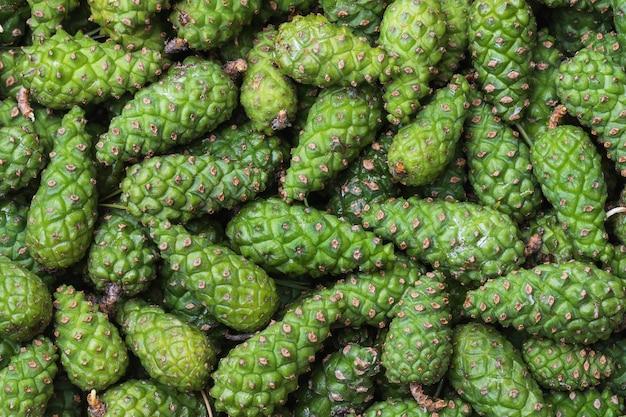 Achtergrond van jonge dennenappels van groene kleur