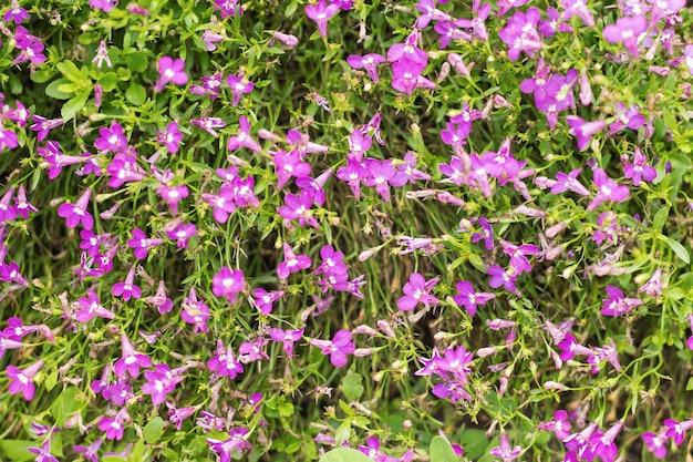 Achtergrond van kleine paarse mooie bloemen met stengels. selectieve aandacht.
