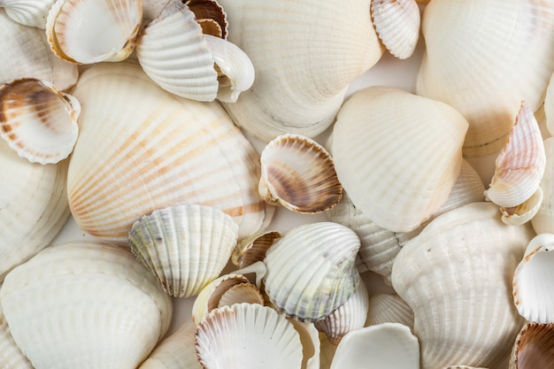 Achtergrond van kleine shells beige schaduwen op een witte achtergrond.