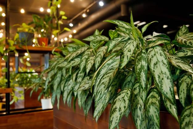 Achtergrond van modern gezellig interieur van restaurant in loft-stijl met groene planten. stijlvol ontwerp van café. getextureerde houten meubels en veel groen. ruimte kopiëren