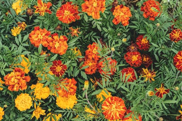 Achtergrond van mooie heldere dikke groeiende tuinbloemen