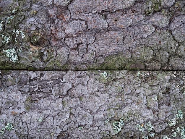 Achtergrond van oude planken met schors en mos. bruin en grijs, schors textuur