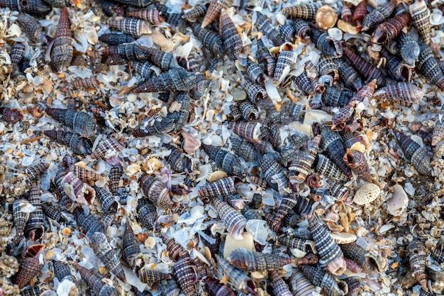 Achtergrond van oude schelpen, zeeschelpen voor gebruik als bouwmateriaal
