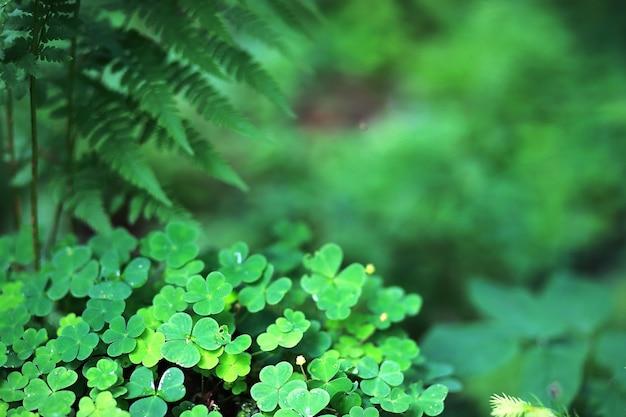 Achtergrond van plant klaver vier blad. iers traditioneel symbool. st. patrick's day.