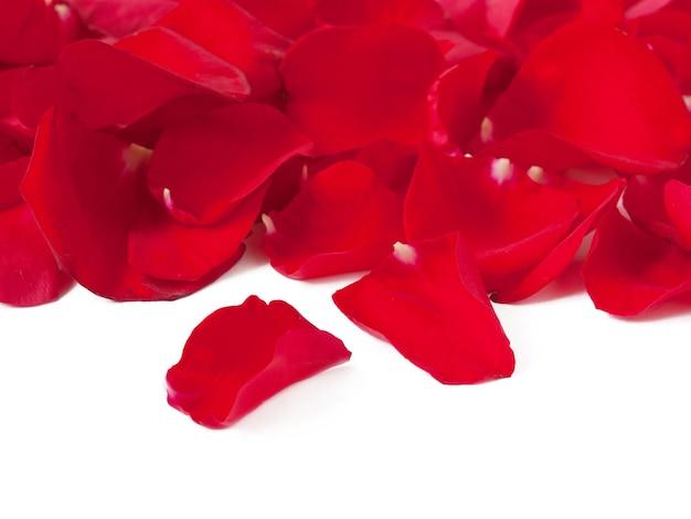 Achtergrond van rode rozenblaadjes op wit in valentijnsdag wenskaart