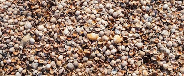 Achtergrond van schelpen, veel kleine mooie schelpen. bovenaanzicht, plat gelegd. banier.