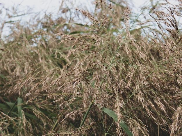 Achtergrond van sombere moerassige struikgewas van gras