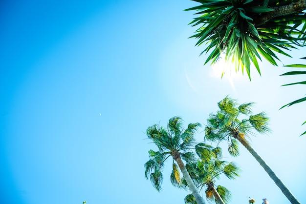 Achtergrond van tropische palmbomen bekeken van onder een zonnige dag, willen een vakantie doorbrengen.