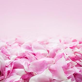 Achtergrond van verse roze rozenblaadjes