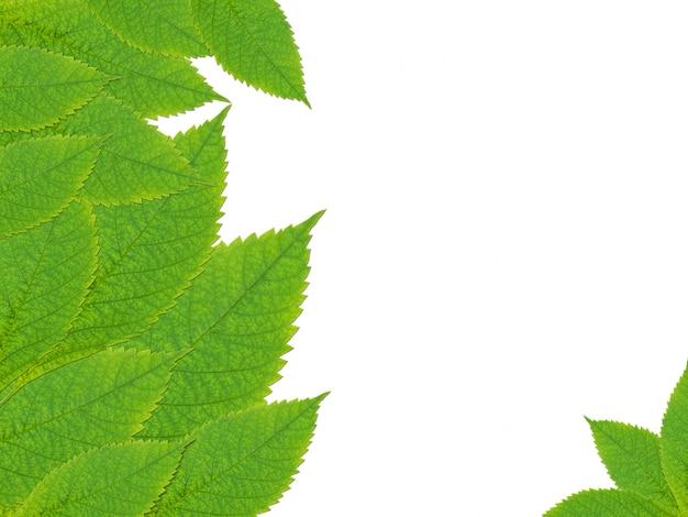 Achtergrondaardkader van groene bladeren met exemplaarruimte