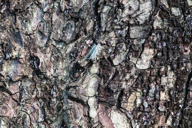 Achtergronddetails van de schors van bomen