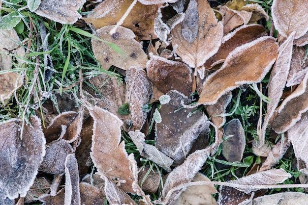Achtergrondfoto met ijs op gebladerte en gras