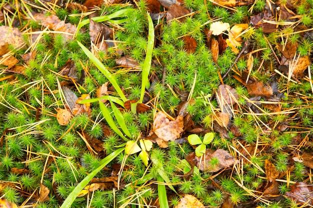 Achtergrondherfst in de bosbodem van mos, gras en gele bladeren van de late herfst