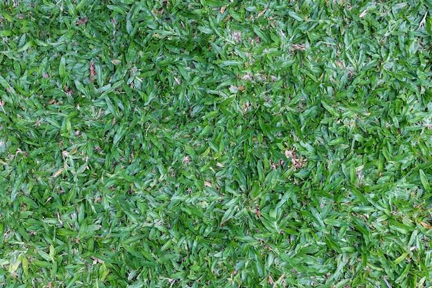 Achtergrondstructuur, groen gras, bovenaanzicht.