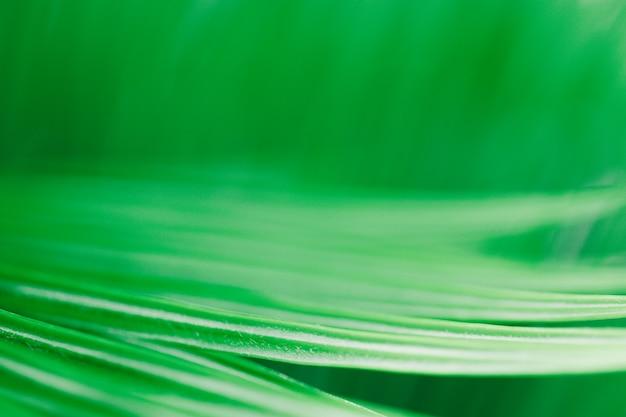 Achtergrondstructuur groene bladstructuur macrofotografie