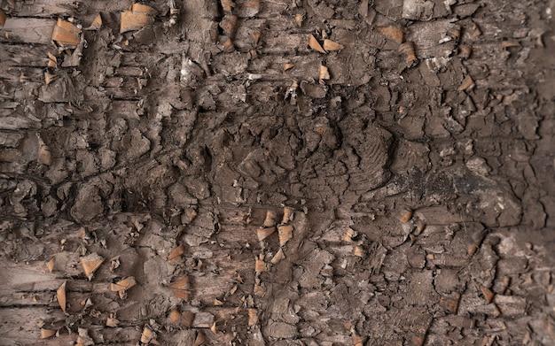 Achtergrondstructuur van boomschors. huid de schors van een boom die scheuren vertoont.