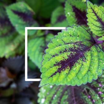 Achtergrondtextuur van bladerenclose-up. groene bladerenachtergrond met witboekkader.