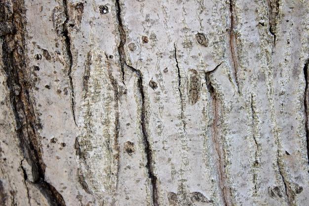 Achtergrondtextuur van boomschors de stam van een oude walnootschors op een walnotenboom