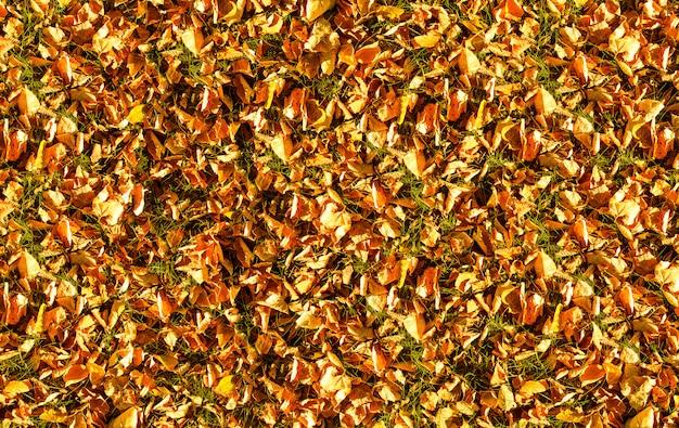 Achtergrondtextuur van de bladeren van de herfstherfst