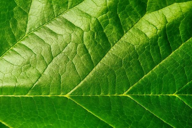 Achtergrondtextuur van groen blad