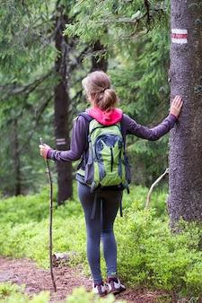 Achtermening van het slanke atletische blonde meisje van de toeristenwandelaar met stok en rugzak die door aangestoken door zon dicht altijdgroen bergpijnboombos lopen. toerisme, reizen, wandelen en een gezonde levensstijl concept.