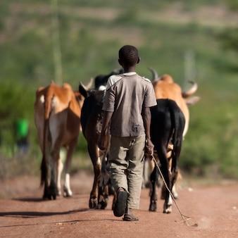 Achtermening van jongen met kudde van vee, nationaal park serengeti, serengeti, tanzania, afrika