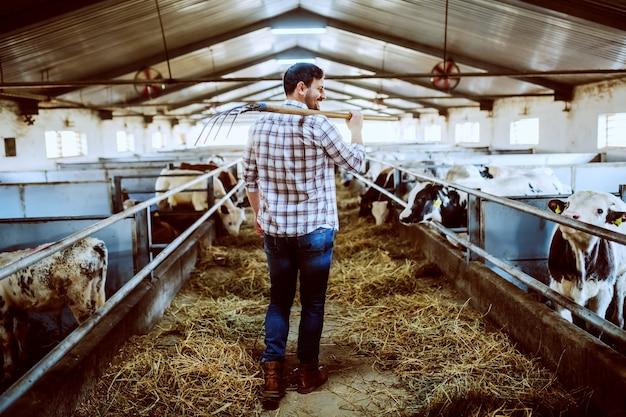 Achtermening van knappe kaukasische landbouwer in plaidoverhemd en jeans die hooivork over schouder houden terwijl het lopen in stal.