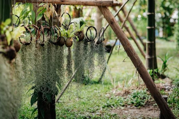Achtertuin met omzoomde kleine hangende bomen