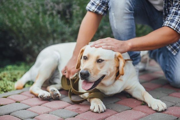 Actieve, glimlach en gelukkige labrador retriever-hond buiten in graspark