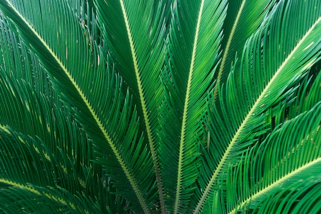 Actuele groene bladachtergrond in aard