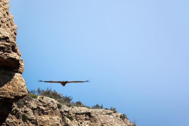 Adelaar die over aard vliegt