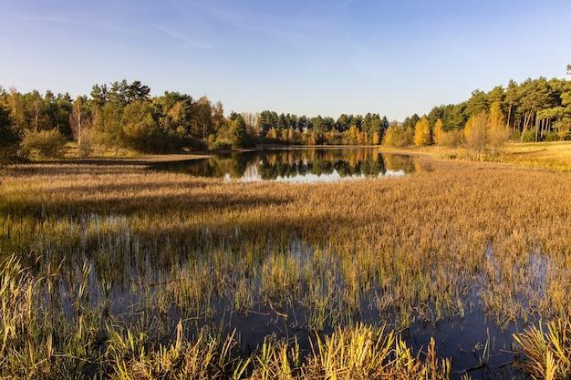 Adembenemend tafereel van een moeras in een bos op een warme zonnige herfstdag
