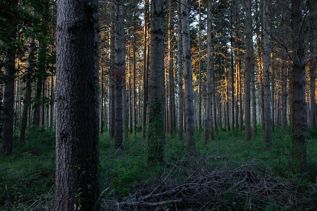 Adembenemend uitzicht op een geweldig bos met veel bomen
