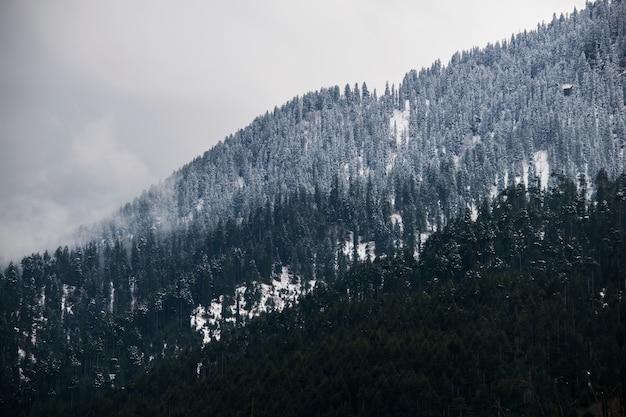 Adembenemende opname van een besneeuwde helling van een berg volledig bedekt met bomen