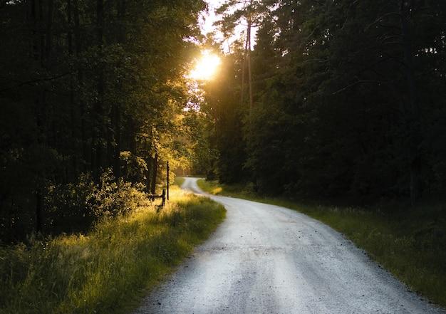 Adembenemende opname van een smalle weg door een bos