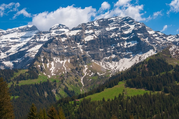 Adembenemende zwitserse alpen met groene bomen en met sneeuw bedekte bergtoppen