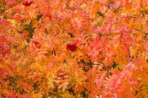 Afbeelding met herfst.