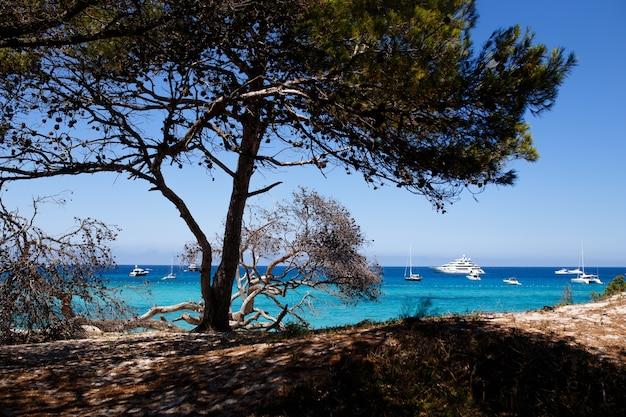 Afbeelding uit corsica, frankrijk, zeegezichtachtergrond. horizontaal zicht.