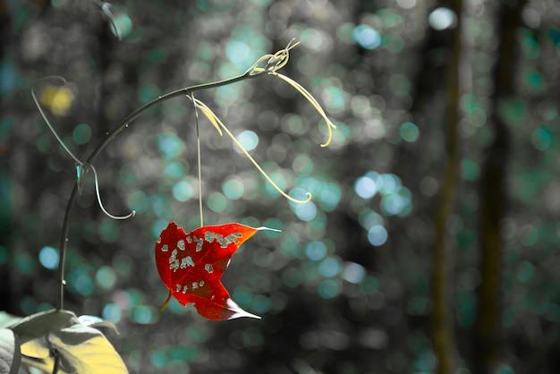 Afbeelding van abstracte bokeh, het licht dat schijnt door de bomen in het regenseizoen.