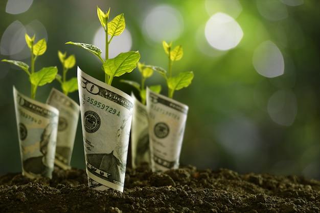Afbeelding van bankbiljetten gerold rond planten op de bodem voor het bedrijfsleven