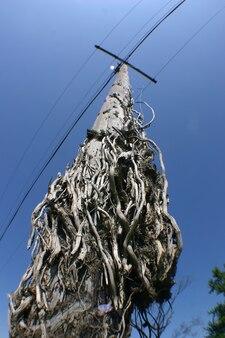Afbeelding van de oude telefoonpaal ziet eruit alsof er slangen uit de basis komen, maar dat is slechts de schors van de boomstam die is gebruikt om de paal te maken