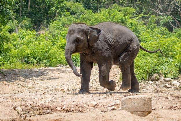 Afbeelding van een jonge olifant op de achtergrond van de natuur in thailand.