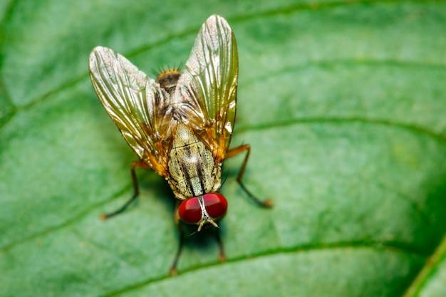 Afbeelding van een vliegen (diptera) op groene bladeren. insect. dier
