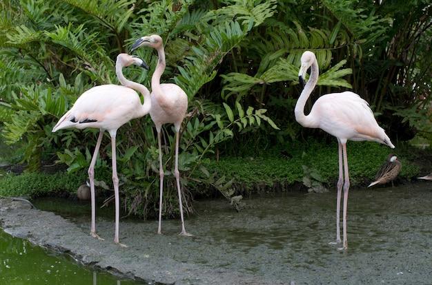 Afbeelding van flamingo's in het water