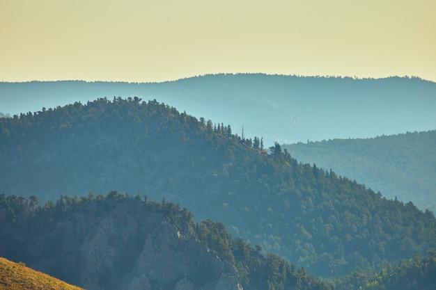 Afbeelding van mistig berglandschap met pijnbomen