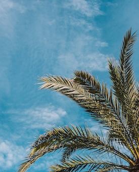 Afbeelding van planten en palmbomen