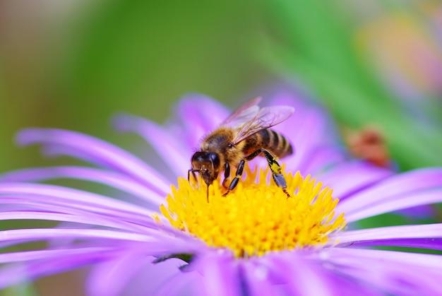 Afbeelding van prachtige violette bloem en bijen